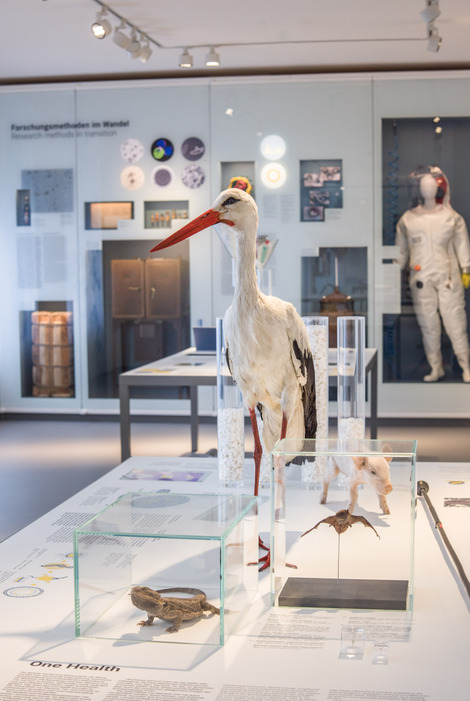 Storks, bats and bearded dragons can spread pathogens which are also dangerous for humans. In the background an incubator from Robert Koch's times and a full-body protection suit from RKI's new BSL-4 laboratory.