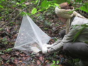Fly-trapping researcher in Taï National Park, Côte d'Ivoire. Source: RKI