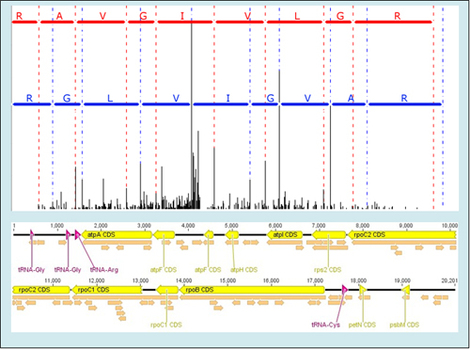 figure of a peptide identification and a genome assembly