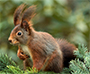New poxvirus in red squirrels in Berlin (Emerging Infectious Diseases, 8.8.2017, with RKI participation)